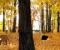 Hidden Objects Forest